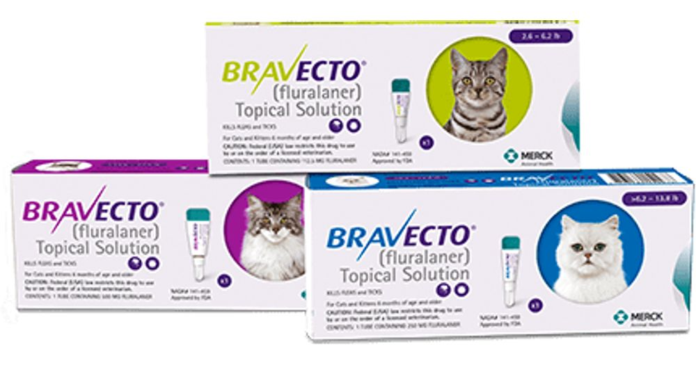 Bravecto For Cats Reviews Productreview Com Au